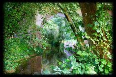 Wonderland In Neverland