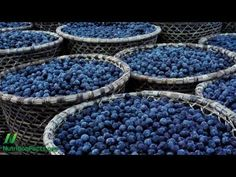 The Science on Acai Berries