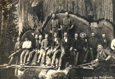 redwood.png (825×568)