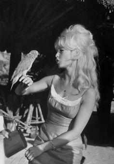 Brigitte Bardot. S)