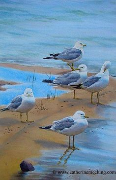 Seagulls On The Shore~ Catherine MC Clung.Com