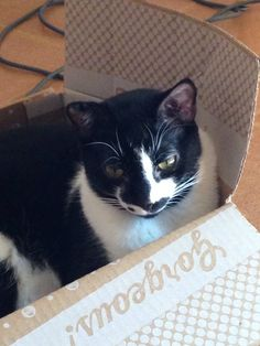 Yep, I am. The box says so.