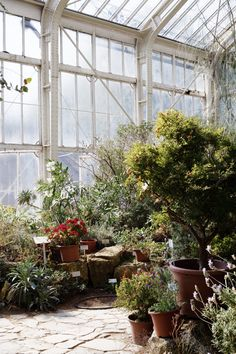 The Elysian Edit | Berlin City Guide with Jessica Jungbauer. Botanical Gardens.