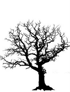 Good example of bare oak tree.