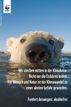 Uns läuft die Zeit davon. Unter der Erderhitzung leidet nicht nur der Eisbär, sie gefährdet unsere gesamte Lebensgrundlage. Unterzeichnet jetzt die #Kohlefrei-Petition des WWF und fordert, dass Deutschland seine Klimaschutzziele nicht aufgibt: