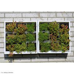 D&M Depot Karoo Verticale Plantenbak 40 x 40 cm Different Plants, Garden Tools, Recycling, Outdoor Structures, Canning, Green Walls, Belgium, Fill, Products