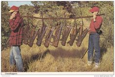 SHOOTING INTEREST POSTCARD - GIANT GRASSHOPPERS. USA . - Shooting (Weapons)