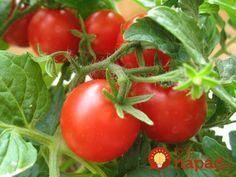 Skúsený záhradník prezradil recept, ktorý používa každý rok a ktorý pôsobí ako simulant a výžiava pre rast paradajok.