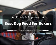 The Best Dog Food For Boxers: Protein Is Important!