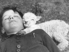 A newborn lamb suggles up to a sleeping child, 1940 Ogmore Vale, Wales.