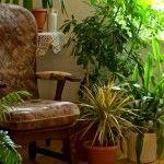 Blühende Zimmerpflanzen mit mehr oder wenig Bedarf an Licht