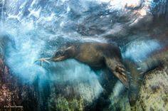 Zwycięzcy konkursu Wildlife Photographer of the Year 2016 - najlepsze zdjęcia przyrodnicze - Podróże