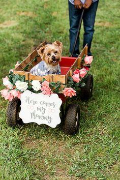 Beach Wedding Photos Dog in wedding ceremony. Perfect Wedding, Fall Wedding, Wedding Ceremony, Dream Wedding, Dogs In Wedding, Weddings With Dogs, Dog Wedding Attire, Dog Wedding Dress, Maui Weddings