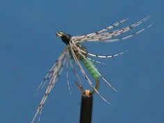 Beginner Fly Tying a Granny Apple GSS Soft Hackle with Jim Misiura - YouTube