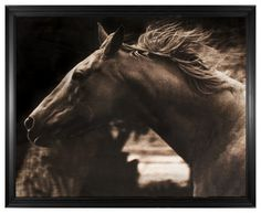 Hyden Rustic Lodge Modern Running Horse Photo Wall Art - Framed - Rustic - Prints And Posters - by Kathy Kuo Home