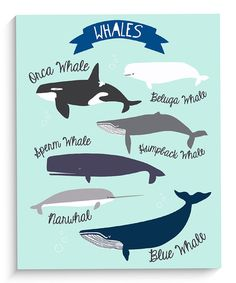 Because whales make me think of wonder and how amazing life is. yes yes yes :: 'Whales' Wall Art