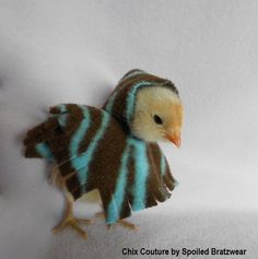 Peep Poncho!!!!   Soft Fleece Photo Prop for Chickens and Pocket Pets-zebra. $14.50, via Etsy.