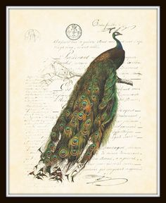 Antique French Peacock Plate 2  Art Print 8 x 10 by BelleBotanica, $10.00