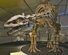 Origin of the species. Setting the stage for sauropods.