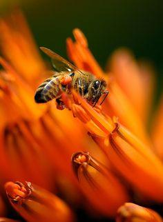 Bienenfutter im Blumenbeet: Schafgarbe, Akelei, Lavendel, Lupine, Wilde Malve, Astern, ungefüllte Dahliensorten.