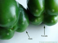 Alternative Gardning: Male or female peppers