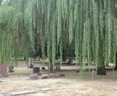 ... be the Lone Fir Cemetery here in Portland, Oregon. It is one of the oldest cemeteries in the city and on several occasions when visiting the grounds I ...