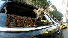 Dogs of Findery! on Flipboard