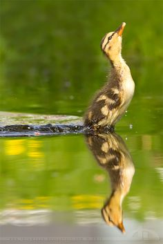 Duck dance!!