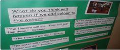 what does inquiry look like in kindergarten? Science Inquiry, 1st Grade Science, Inquiry Based Learning, Project Based Learning, Science Education, Early Learning, Kindergarten Inquiry, Full Day Kindergarten, Preschool Classroom