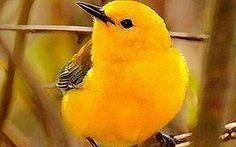 Google+ Parrot, Bird, Signs, Google, Parrot Bird, Birds, Shop Signs, Sign, Parrots