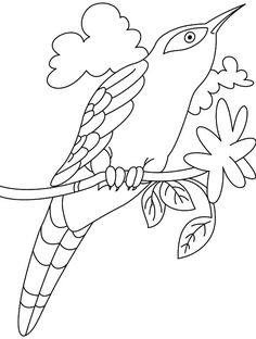 cuckoo bird drawing cuckoo bird coloring pages