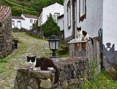 Eine Millionen Azorianer leben im Ausland. In vielen Dörfern wohnen nur noch Katzen.