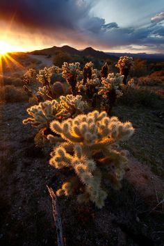 Arizona....sunrise over the desert
