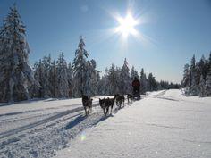 Husyksafari with Husky Center Kolmiloukko, Taivalkoski, Lapland, Finnland www.kolmiloukko.com