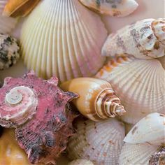 Beach Shells jigsaw puzzle by Ravensburger