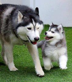 mommy, mommy, mommy, mommy........