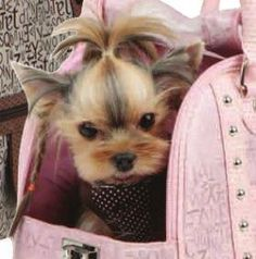 yorkie haircuts - Google Search