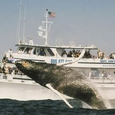 Whale watching in Boston. So cool!