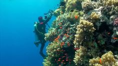 SCUBA Diving Egypt Red Sea - Beautiful video! The visibility is just amazing and the marine life is spectacular. The Red Sea just made it to my dive bucket list. Wow!