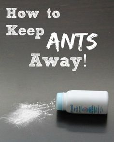 How to Keep Ants Away with Baby Powder