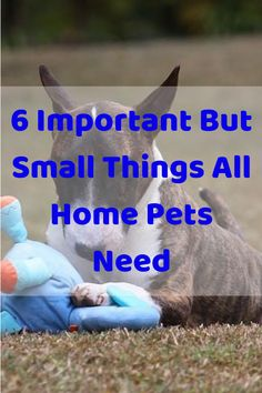 6 Important But Small Things All Home Pets Need. Getting a new pet has a lot of responsibilities, from potty training to daily exercise. New pet owners. Love Your Pet, Love Pet, Tug Of War, Extreme Weather, Potty Training, Types Of Collars, Small Things, Big Dogs, Peace Of Mind