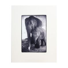 NOVICA Mother and Baby Elephants Black and White Photograph (515 SAR) ❤ liked on Polyvore featuring home, home decor, wall art, black and white, paintings, thai home decor, black white painting, photo wall art, black and white wall art and novica paintings