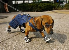 The coolest dog ever went for a walk.