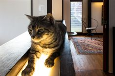 """Bobbie & Matthew's Inspiring Vintage Modern Home"". -Light Warming Cat: wнy υ ĸeep ѕαyιɴ'... вoввιe & мαттнew's нoмe? ιт'ѕ мιιιιɴe!"