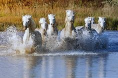 Horses | Our Beautiful World and Universe