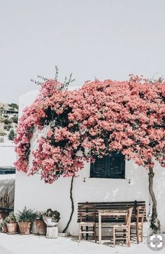 days of camille: trip in greece: les cyclades - paros Bougainvillea, Beautiful World, Beautiful Places, Places To Travel, Places To Visit, Travel Destinations, Belle Photo, Wanderlust, Around The Worlds