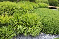 Ogólne, ogrodnicze wskazówki w projektowaniu i realizacji ogrodów - strona 45 - Forum ogrodnicze - Ogrodowisko