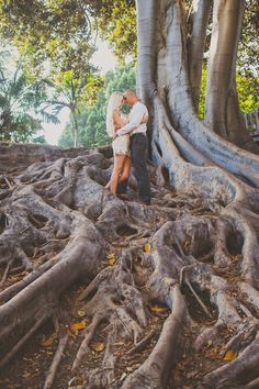 Balboa Park Tree With Big Roots Engagement Photos