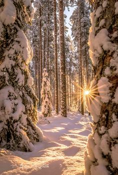 ***Valoa metsässä // Light in the forest (Finland) by Asko Kuittinen❄️nw.