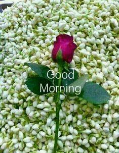 Good Morning Apps, Good Morning Couple, Good Morning Husband, Good Morning Gif Images, Beautiful Morning Pictures, Good Morning Romantic, Funny Good Morning Messages, Good Morning Animation, Good Morning Dear Friend